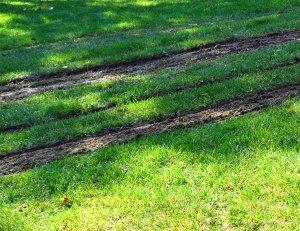 lawn job